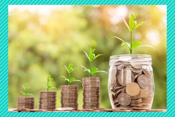 Keep an eye on finances money plant